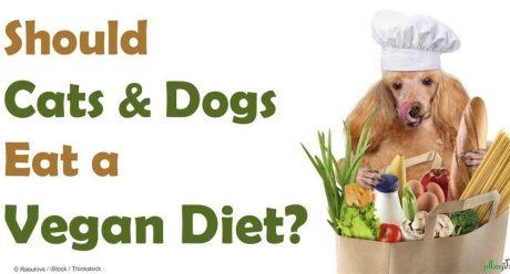 علاقه مند کردن سگ به غذای گیاهی