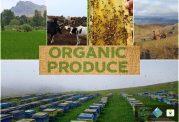 چرا محصولات ارگانیک استفاده کنیم؟
