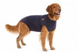 فواید تهیه لباس برای سگ خانگی