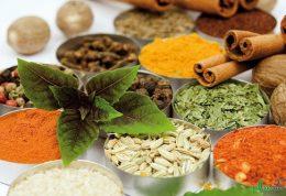 فواید سنجد و رازیانه از منظر طب سنتی