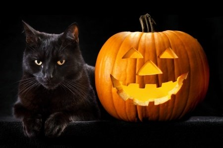 خرافه های رایج در مورد گربه