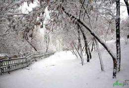 آب و هوای سرد چه فوایدی برای سلامتی دارد!