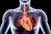 فاکتورهای مهم در توجه به بیماری های قلبی