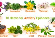 محصولات گیاهی پرخاصیت برای درمان فراموشی