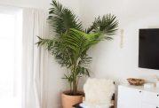 اهمیت استفاده از گیاهان آپارتمانی
