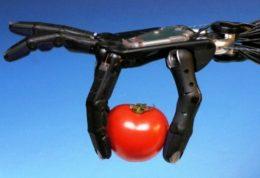 روباتها گوجه فرنگی تشخیص می دهند