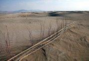 در مناطق بیابانی ارومیه و طبس گیاه کاشت می شود