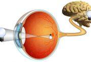 تصویربرداری از شبکیه چشم به روش ابداعی غیرتهاجمی
