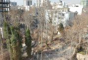 تخریب باغ در خیابان فرشته