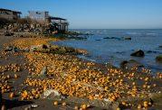 ریخته شدن پرتقالهای یخ زده در خزر