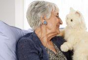 زندگی گربه ها در کنار سالمندان
