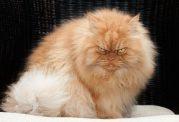 رفتارهای منفی در گربه ها