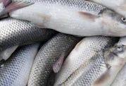 7 خاصیت ماهی