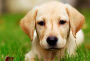 آیا میخواهید سگ بخرید؟این موارد را بخوانید