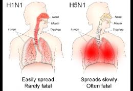 مقابله با انتقال آنفلوآنزای مرغی