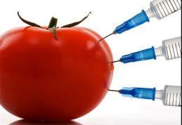 اصلاح ژنتیک در راه اصلاح طعم گوجه فرنگی