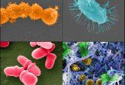 بررسی درمان های آنتی بیوتیکی