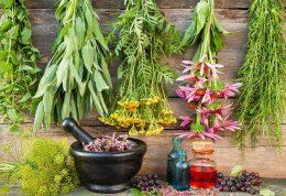 ۷ داروی گیاهی مبارزه کننده با سرماخوردگی و آنفولانزا