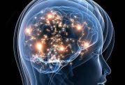 ارتباط رفتارها با هورمون های بدن