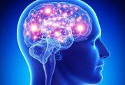 مواد معدنی و ویتامین های ضروری برای سلامت مغز