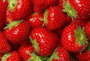 تاثیرات مفید توت فرنگی در خون سازی