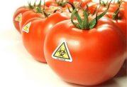 آیا استفاده از محصولات تراریخته سلامت ما را به خطر می اندازد