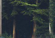پیدا کردن راه پس از گم شدن در طبیعت