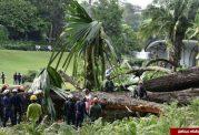 مرگ یک شخص به دلیل سقوط درخت کهنسال ۲۷۰ ساله