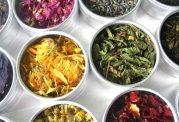 توجه ویژه به بحث گیاهان دارویی و طب سنتی