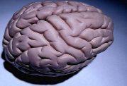 تفاوت های مغزی افراد بیش فعال با سایر انسان ها