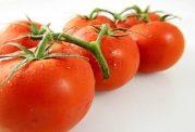 گوجه فرنگی،آب و املاح بدن را تامین می کند