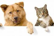 گربه قدرت حافظه اش بیشتر است یا سگ؟