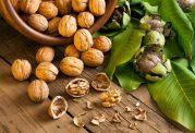 گردو مغزی مفید برای برای تقویت هورمون های مردانه