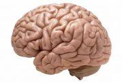 شبیه سازی مغز بصورت سه بعدی توسط محققان