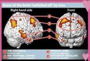 رخدادهای مغز هنگام عاشق شدن