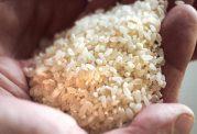 چگونه برنج مرغوب را از نوع غیر مرغوب تشخیص دهیم؟