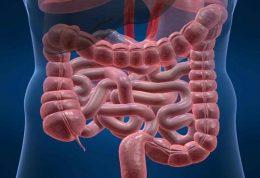 عفونت روده چه علائمی دارد و چگونه درمان می شود