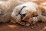 انواع الگوهای خواب در انسان و حیوان