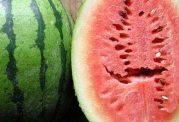 چه نوع هندوانه ای، سرطان زا است؟!