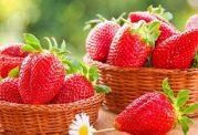 چه توت فرنگی هایی دارای ویتامین بیشتر هستند