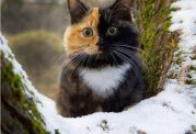با نمک ترین گربه جهان