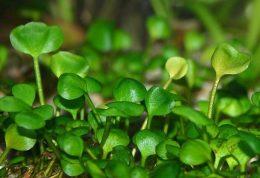 ساعت زیستی برای گیاهان