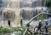 18 قربانی به دلیل سقوط یک اصله درخت درغنا