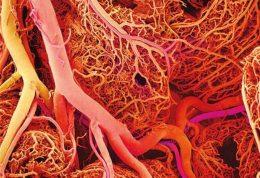 شبکه ای از رگ های خونی در یک چاپ سه بعدی