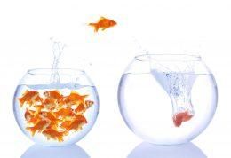 ماهی قرمز، خطری برای انسان ندارد!