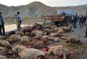 66 راس گوسفند به علت تصادف با کامیون جان باختند