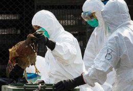 شیوع آنفلوآنزای پرندگان در روسیه