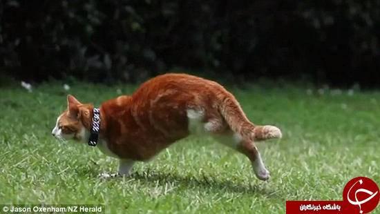 گربه ای که فقط یک پای جلو و یک پای عقب دارد