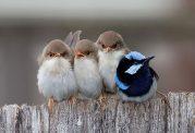 فواید سلامت روان ناشی از تماشای پرندگان