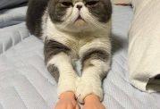 گربه ای با دست مصنوعی انسان